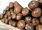 美洲冷杉木材进口